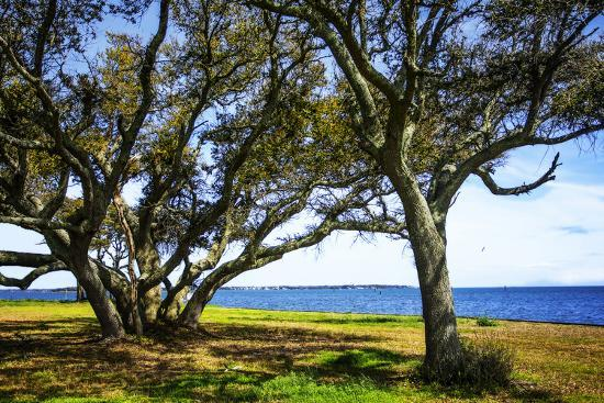 Live Oaks by the Bay I-Alan Hausenflock-Photographic Print