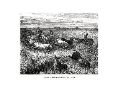 Livestock, Los Llanos, Venezuela, 19th Century-Edouard Riou-Giclee Print