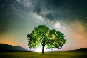 Lonely Tree on Field under Milky Way Galaxy, Dobrogea, Romania by Liviu Pazargic
