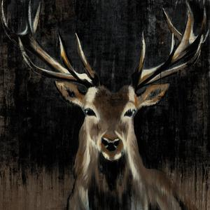 Young Buck by Liz Jardine