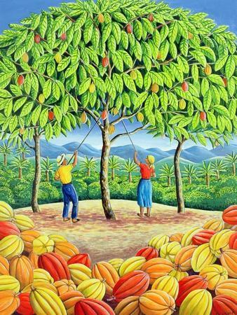 Cocoa Tree, 1993
