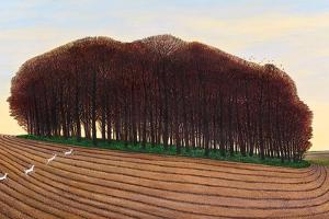 Dorset Clump of Trees, 2012 by Liz Wright