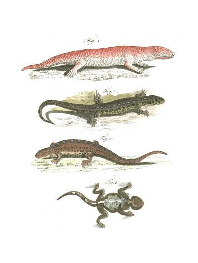 Lizard Scientific Illustrations--Art Print