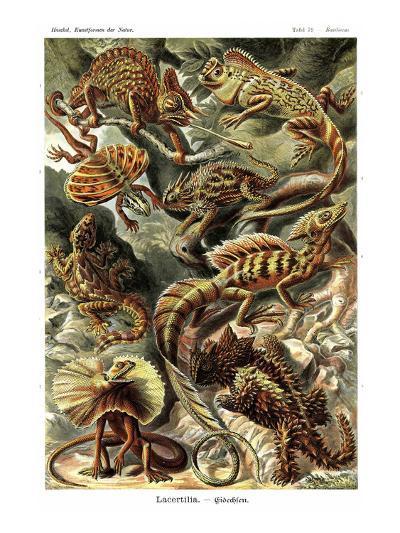 Lizards-Ernst Haeckel-Art Print