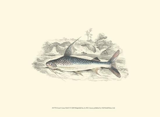 Lizars' Game Fish IV-W^h^ Lizars-Art Print