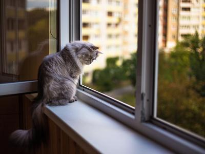 Beautiful Grey Cat Sitting on a Windowsill and Looking to the Window