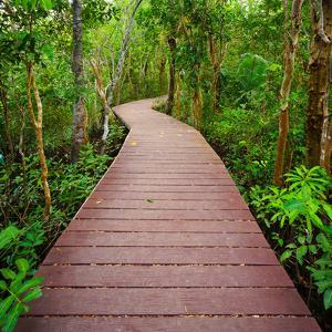 Path to the Jungle,Trang,Thailand by lkunl