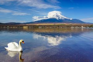 White Swan with Mount Fuji at Yamanaka Lake, Yamanashi, Japan by lkunl