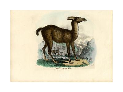 Llama, 1863-79-Raimundo Petraroja-Giclee Print