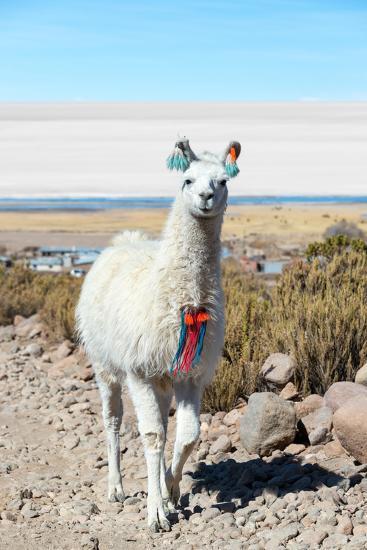 Llama with Uyuni Salt Flats-jkraft5-Photographic Print