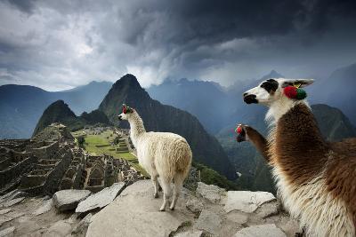 Llamas Overlook the Pre-Columbian Inca Ruins of Machu Picchu-Jim Richardson-Photographic Print