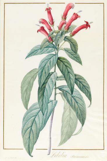 Lobelia Surinamensis-Pierre Joseph Redoute-Giclee Print