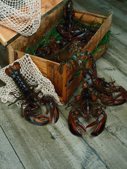 Lobsters-Martin Fox-Photographic Print
