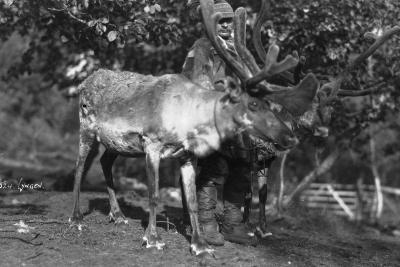 Local Man with a Reindeer, Lyngen, Northern Norway, C1920S-C1930S--Giclee Print