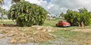 Local palm tree handcrafting near Pinar del Rio, Cuba