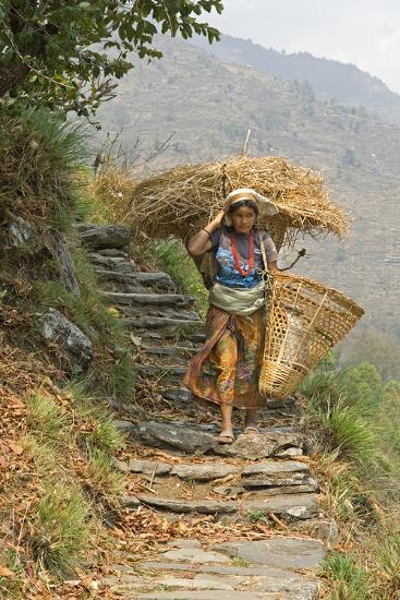 Local Woman Follows a Trail Carrying a Basket Called a Doko, Annapurna, Nepal-David Noyes-Photographic Print