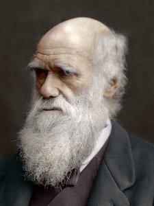 Charles Darwin, British Naturalist, 1878 by Lock & Whitfield