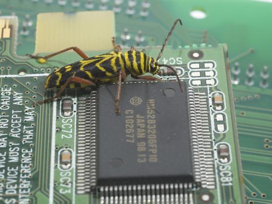 Locust Borer, Megacyllene Robiniae, on a Printed Circuit Board Next to an Integrated Circuit-B. Mete Uz-Photographic Print