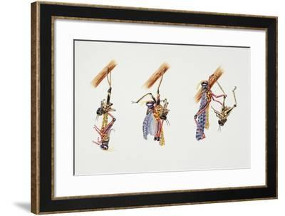 Locust Moulting, Artwork by Adrian Lascaw--Framed Giclee Print