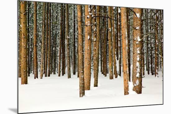 Lodge Poles-Howard Ruby-Mounted Photo