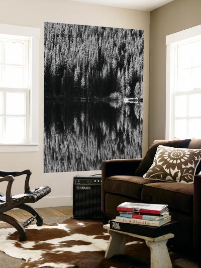 Lodgepole Pines Along Bear Lake, Rocky Mountains National Park, Colorado, USA-Adam Jones-Giant Art Print