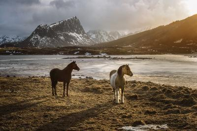Lofoten Horses-Marco Carmassi-Photographic Print