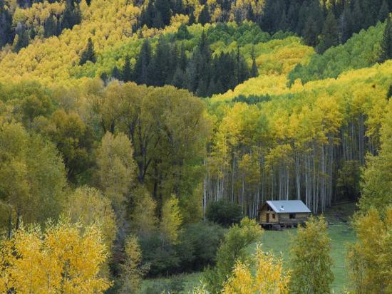 Log Cabin in Fall Colors, Dolores, San Juan National Forest, Colorado, USA-Rolf Nussbaumer-Photographic Print
