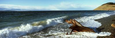 Log on the Beach, Ebey's Landing National Historical Reserve, Whidbey Island, Island County--Photographic Print