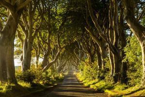 A road runs through the Dark Hedges tree tunnel at sunrise in Northern Ireland, United Kingdom by Logan Brown
