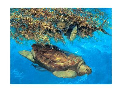Loggerhead and Dolphins in Sargassum Sea, 2000-Stanley Meltzoff-Giclee Print
