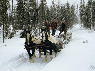 Loggers Haul Freshly Cut Timber on a Horse-Drawn Sleigh-B^ Anthony Stewart-Photographic Print