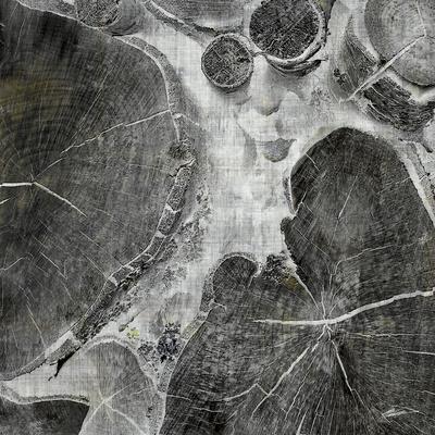 Logging I-John Butler-Photographic Print