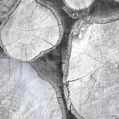 https://imgc.artprintimages.com/img/print/logging-light-ii_u-l-q11jtel0.jpg?p=0