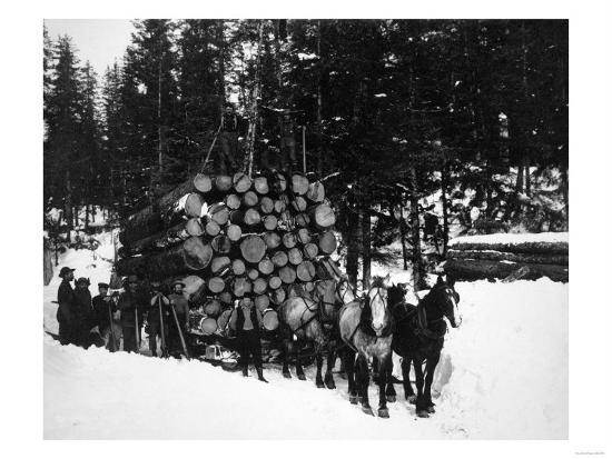 Logs being hauled on a Sleigh by a Team of Horses Photograph - Alaska-Lantern Press-Art Print