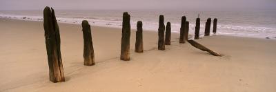 Logs on the Beach, Spurn, Yorkshire, England, United Kingdom--Photographic Print