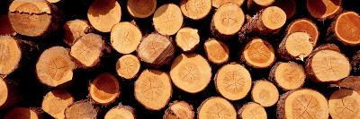 Logs--Photographic Print