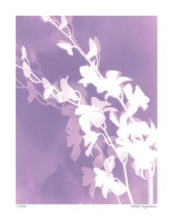 Flower Shadow V