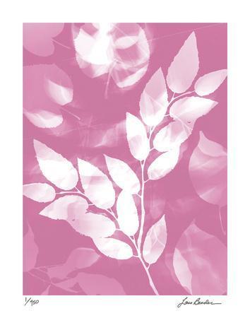 Flower Shadow VI