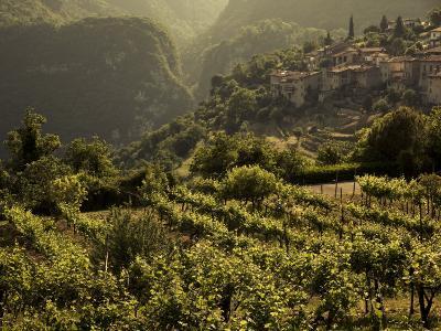 Lombardy, Lake District, Lake Garda, Tremosine Plateau, Sermerio, Vineyards, Italy-Walter Bibikow-Photographic Print