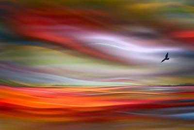 Lone Bird-Ursula Abresch-Photographic Print