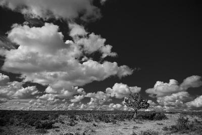 Lone Cedar Tree, New Mexico-Steve Gadomski-Photographic Print