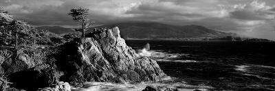 Lone cypress on the coast, Pebble Beach, Monterey County, California, USA--Photographic Print