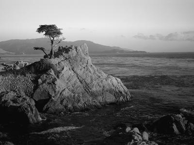 Lone Cypress Tree on Rocky Outcrop at Dusk, Carmel, California, USA-Howell Michael-Photographic Print