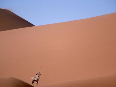Lone Gemsbok Walking On Sand Dunes-Richard Olivier-Photographic Print
