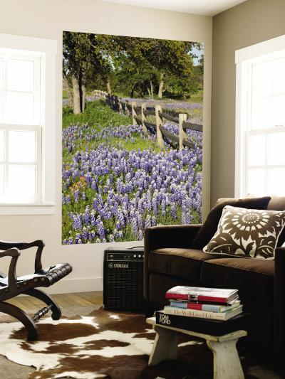 Lone Oak Tree Along Fence Line With Spring Bluebonnets, Texas, USA-Julie Eggers-Wall Mural