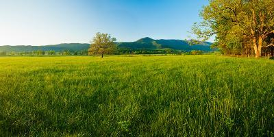 Lone Oak Tree in a Field, Cades Cove, Great Smoky Mountains National Park, Tennessee, USA--Photographic Print