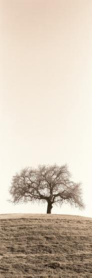 Lone Oak Tree-Alan Blaustein-Photographic Print