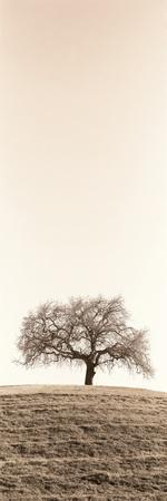 https://imgc.artprintimages.com/img/print/lone-oak-tree_u-l-q1b7sjt0.jpg?p=0