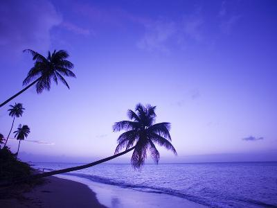 Lone Palm Trees at Sunset, Coconut Grove Beach at Cade's Bay, Nevis, Caribbean-Greg Johnston-Photographic Print
