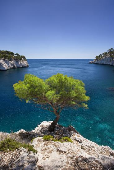 Lone Pine Tree Growing Out of Solid Rock, Calanques Near Cassis, Provence, France-Brian Jannsen-Photographic Print